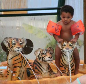 Tiger puppies